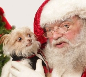 sketchy-santa-fails-the-dog-meets-someone-as-hairy-as-he-is-300x267