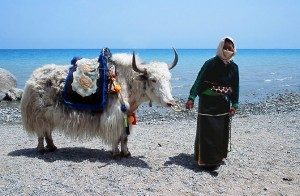 """Those who own a Yak also have to worry about their Yak"" - Tibetan saying"