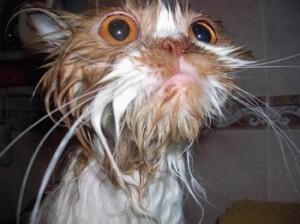 01-wet-cat_orange_closeup